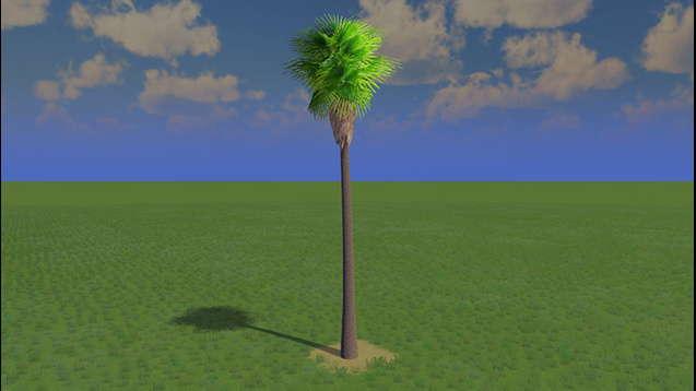 Высокая пальма Робуста