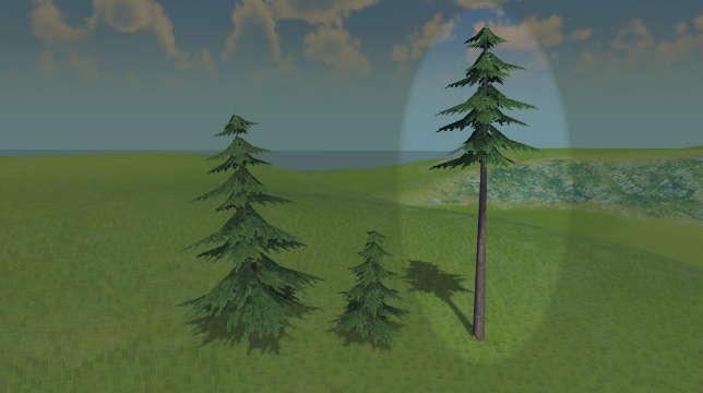 Высокое хвойное дерево
