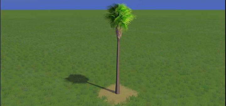 Robusta Palm Short